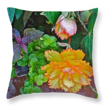 Apricot Begonia 3 Throw Pillow