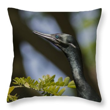 Aqua Blue Eyes - Little Cormorant Throw Pillow