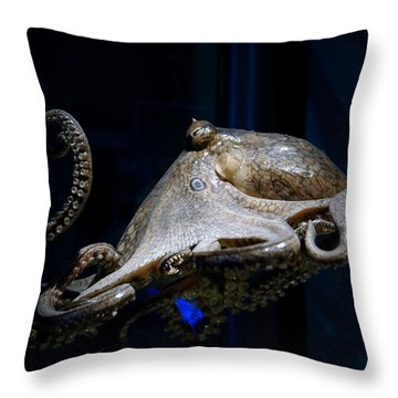Aquatic Red Wing Fan Throw Pillow