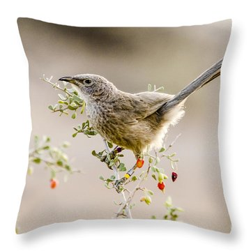 Arabian Babbler Throw Pillow by Arik Baltinester
