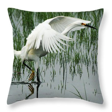 Throw Pillow featuring the photograph Arched Wings by William Selander