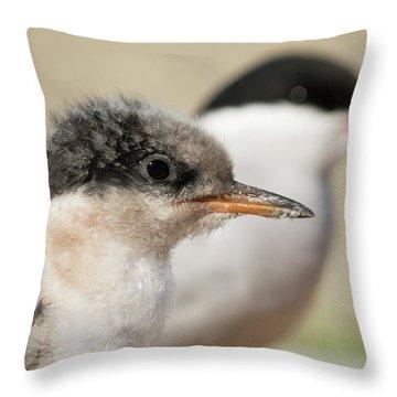 Arctic Tern Chick With Parent - Scotland Throw Pillow