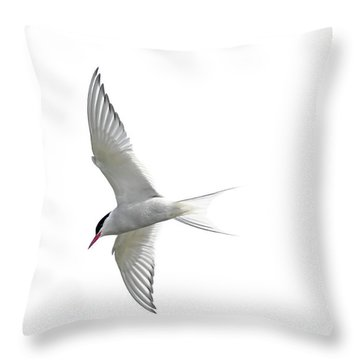 Arctic Tern Flying In Mist Throw Pillow