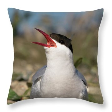 Throw Pillow featuring the photograph Arctic Tern - St John's Pool, Scotland by Karen Van Der Zijden