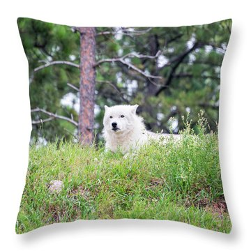 Arctive Wolf Lying Down Throw Pillow