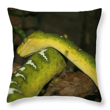 Are I Coming Or Are I Going Throw Pillow by David Dunham