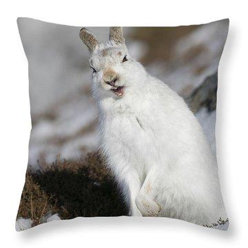 Are You Kidding? - Mountain Hare #14 Throw Pillow