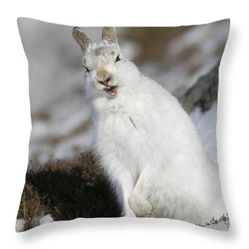 Are You Kidding? - Mountain Hare #14 Throw Pillow