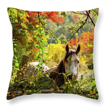Throw Pillow featuring the photograph Are You My Friend? by Jeff Folger