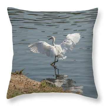 Are You Ready To Dance - Great Egret In Mtn View Ca Throw Pillow