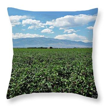 Arizona Cotton Field Throw Pillow