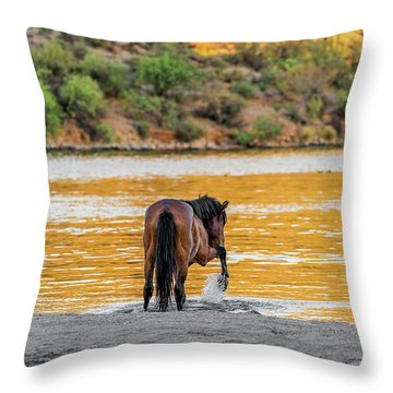 Arizona Wild Horse Playing In Water Throw Pillow