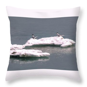 Arctic Terns On A Bergy Bit Throw Pillow