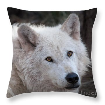 Artic Wolf Throw Pillow by Laurinda Bowling