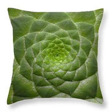 Artistic Nature Green Aeonium Cactus Macro Photo 203 Throw Pillow