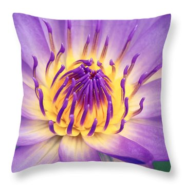 Ao Lani Heavenly Light Throw Pillow