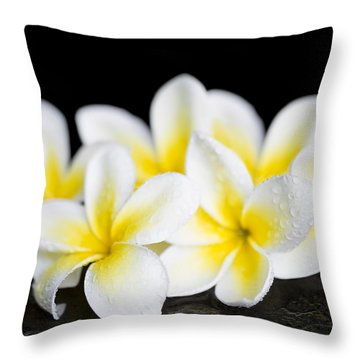 Throw Pillow featuring the photograph Plumeria Obtusa Singapore White by Sharon Mau
