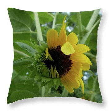 Sunflower Rising Throw Pillow