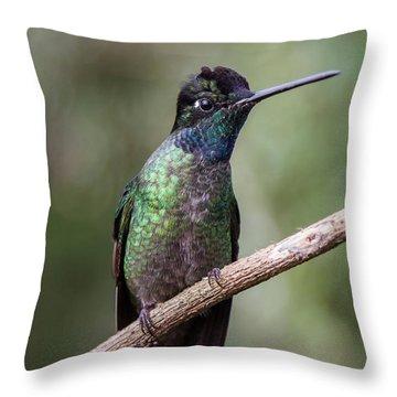 Magnificent Hummingbird 1 Throw Pillow