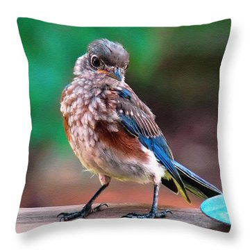I'm New Around Here Throw Pillow by Sue Melvin