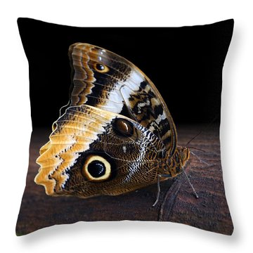 Yellow-edged Giant Owl Butterfly Throw Pillow