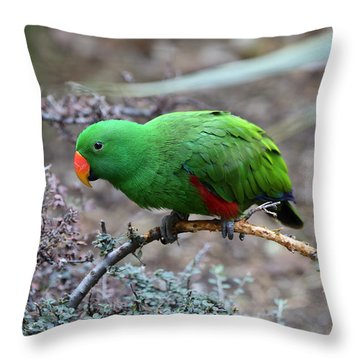 Green Male Eclectus Parrot Throw Pillow
