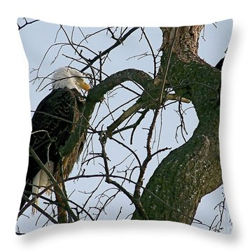 As The Eagle Looks On Throw Pillow by Sue Stefanowicz