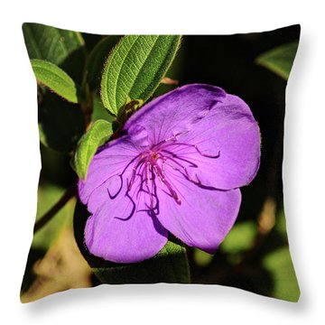Asian Melastome Throw Pillow