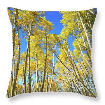 Throw Pillow featuring the photograph Aspen Road by Ray Mathis