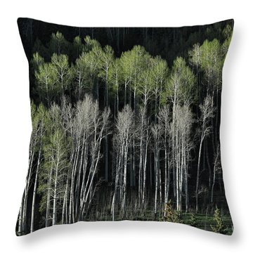 Aspen Spring Throw Pillow