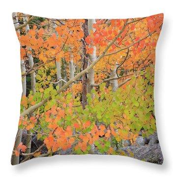 Aspen Stoplight Throw Pillow