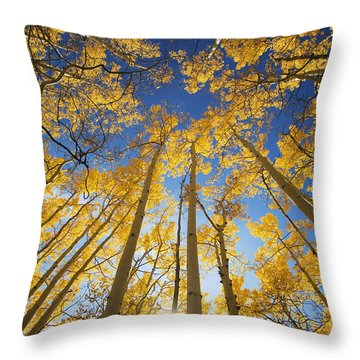Aspen Tree Canopy 3 Throw Pillow by Ron Dahlquist - Printscapes
