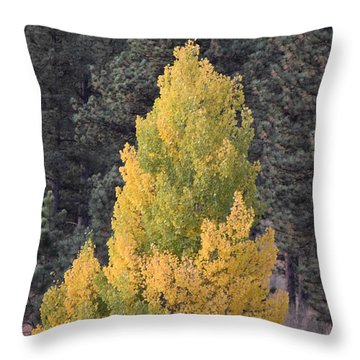 Aspen Tree Fall Colors Co Throw Pillow