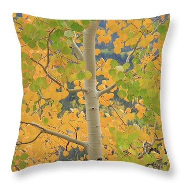 Throw Pillow featuring the photograph Aspen Watching You by David Chandler