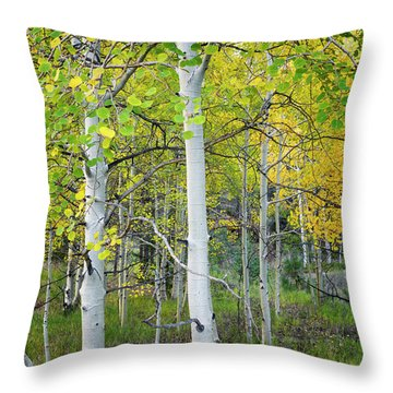 Aspens In Autumn 6 - Santa Fe National Forest New Mexico Throw Pillow