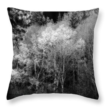 Aspens In Morning Light  For Traci Throw Pillow