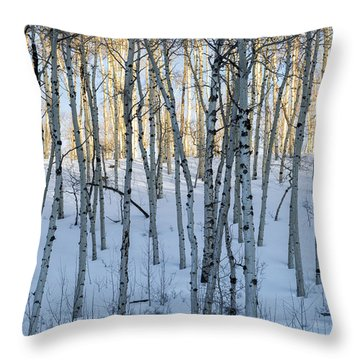 Aspens In Shadow And Light Throw Pillow