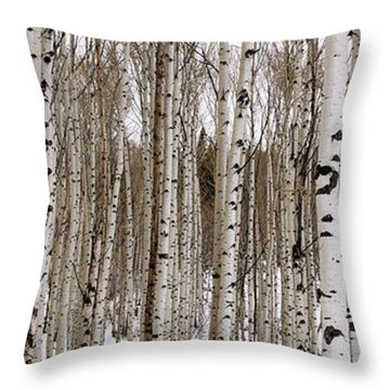 Aspens In Winter Panorama - Colorado Throw Pillow
