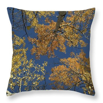 Throw Pillow featuring the photograph Aspens Looking Up by Mary Hone