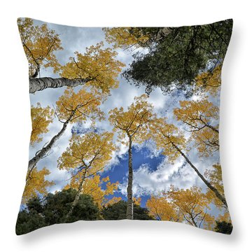 Throw Pillow featuring the photograph Aspens Reaching by Kevin Munro