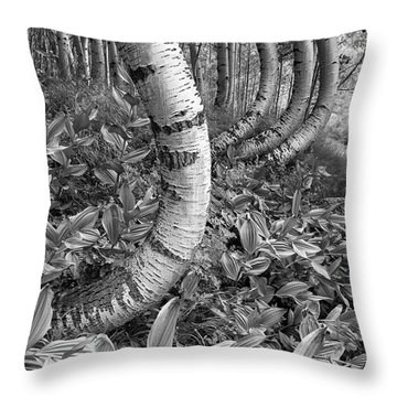 Aspens With Curves Throw Pillow