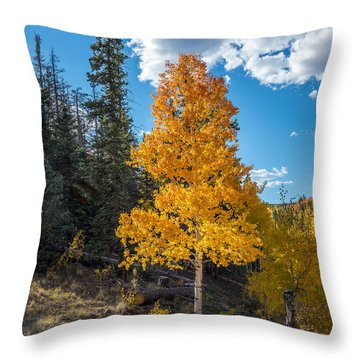 Aspen Tree In Fall Colors San Juan Mountains, Colorado. Throw Pillow