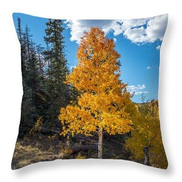 Aspen Tree In Fall Colors San Juan Mountains, Colorado. Throw Pillow