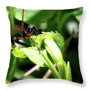 Throw Pillow featuring the photograph Assassin Bug by Meta Gatschenberger