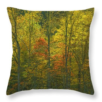 At The Edge Of The Forest Throw Pillow by Ulrich Burkhalter