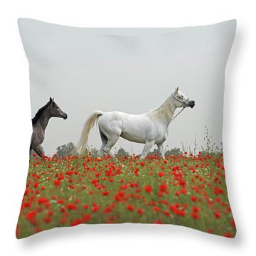 At The Poppies' Field... Throw Pillow by Dubi Roman