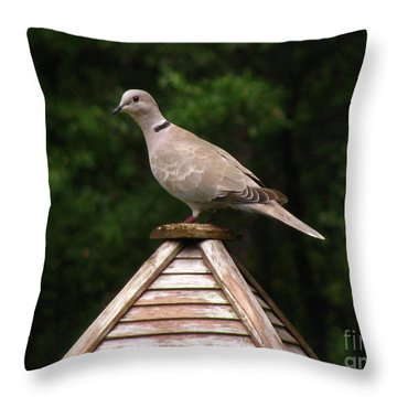 At The Top Of The Bird Feeder Throw Pillow by Donna Brown