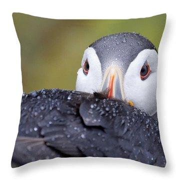Atlantic Puffin With Rain Drops Throw Pillow