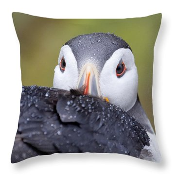 Atlantic Puffin With Rain Drops Throw Pillow
