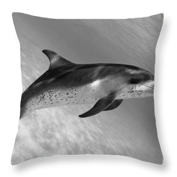 Atlantic Spotted Dolphin Throw Pillow by Dave Fleetham - Printscapes